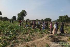 coopératives Mali